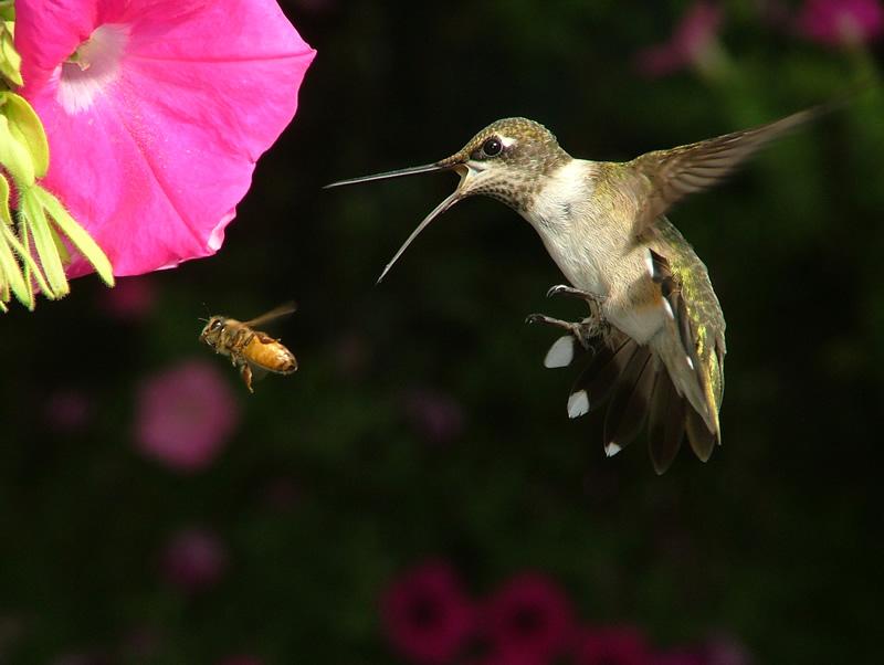 google hummingbird content seo